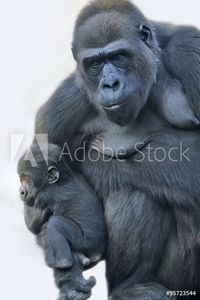 Bild på A gorilla mother with her baby, hanging on her arm.