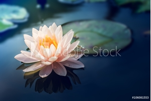 Bild på A beautiful pink waterlily or lotus flower in pond