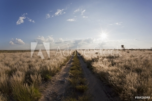 Bild på Africa, Botswana, View of central kalahari game reserve with track